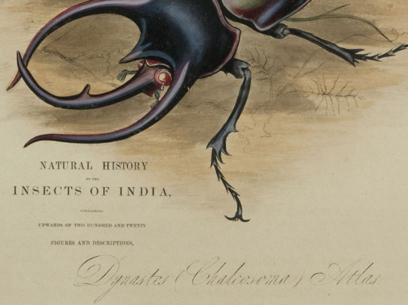 Natural history of the insects of India. 1842
