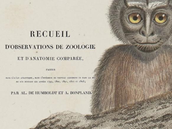 Recueil d'observations de Zoologie et d'Anatomie Comparée; faites dans l'Océan Atlantique. v. 1, 1811